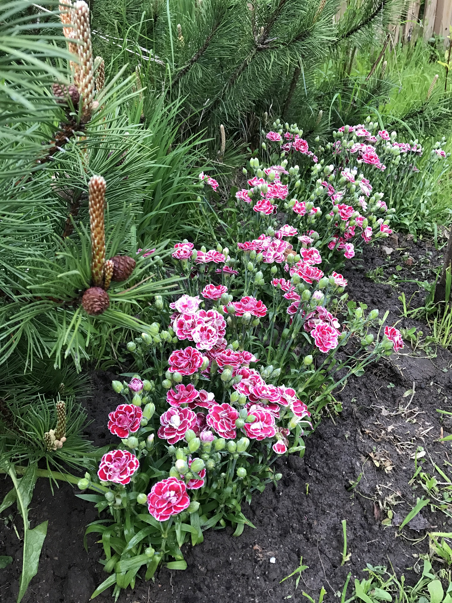 Цветник Балтийская флора